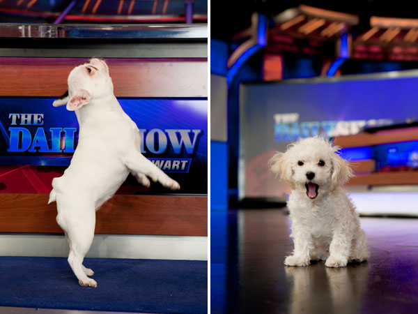Left: Zuzu Right: Teddy on the set of The Daily Show