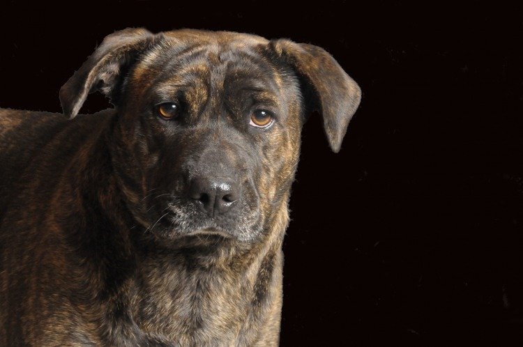 Adoptable Dogs from Coshocton county shelter