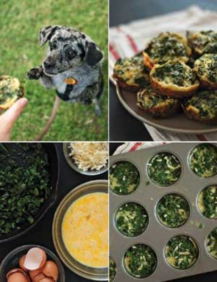 Dog-Sized Baked Frittatas