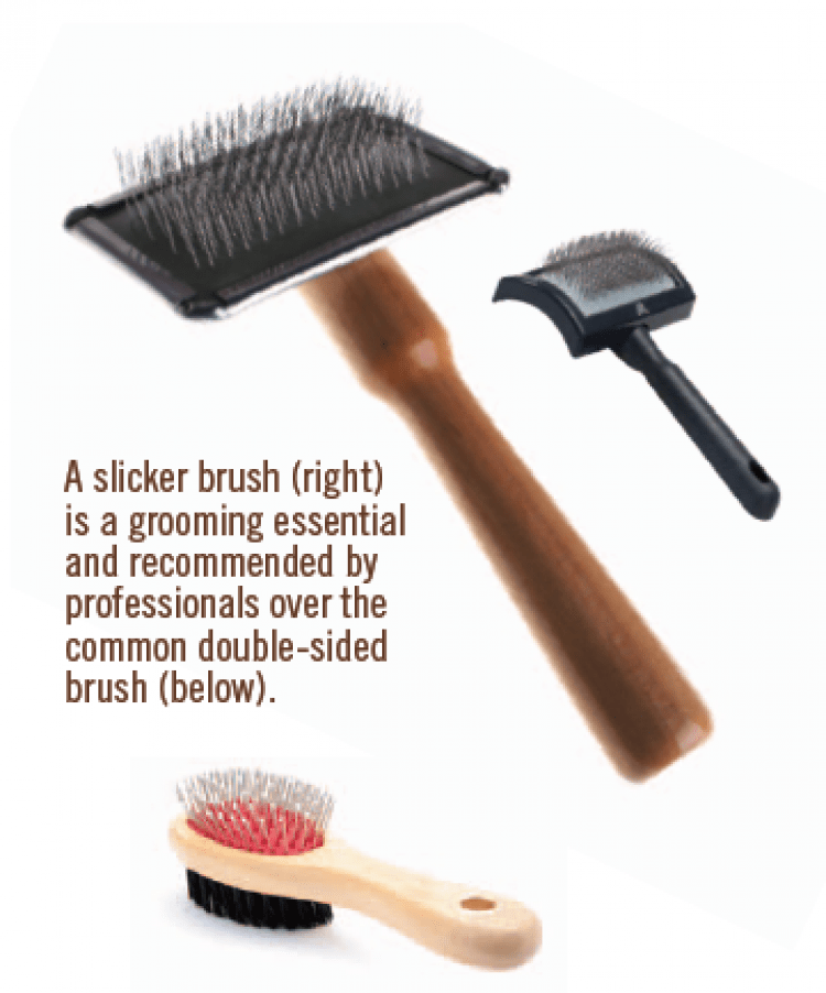 A slicker brush is a grooming essential and recommended by professionals.