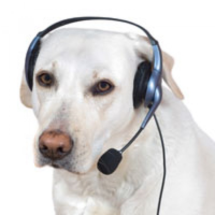 LOST DOG CALL CENTER