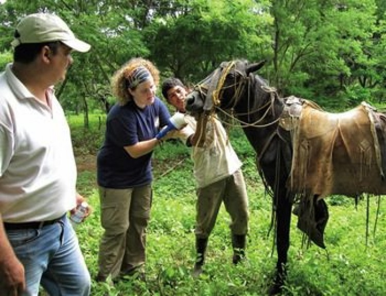 Second-year veterinary student Tomasina Lucia deworms a horse in Nicaragua.