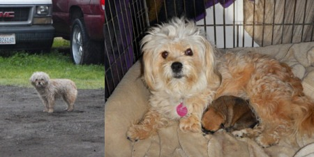 Left to Right: Ava as stray; Ava with Puppy